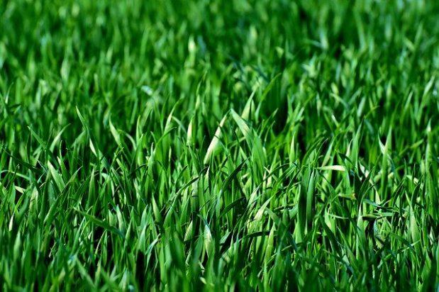 המעלות של התקנת דשא סינטטי